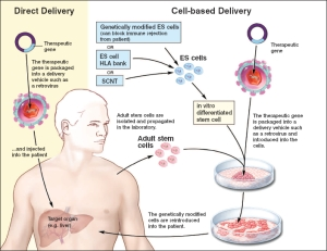 Hemopoietic Processes as Targets of Therapy